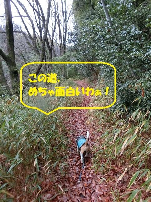 CIMG9015.jpg