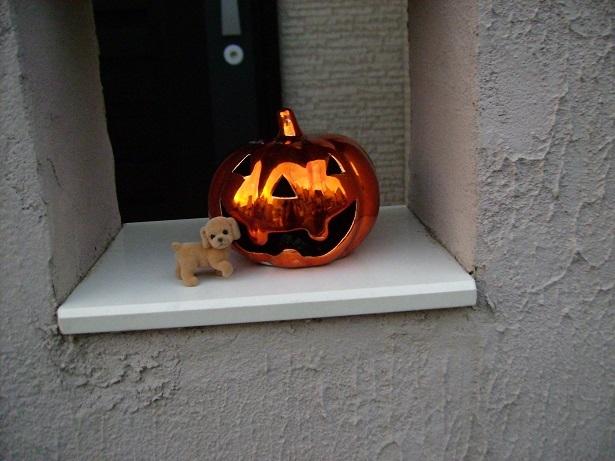 かぼちゃはろーw