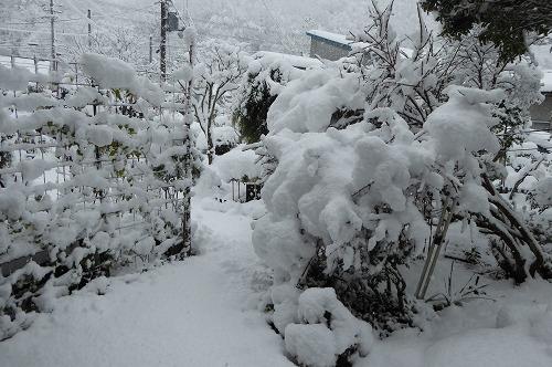 庭の雪模様