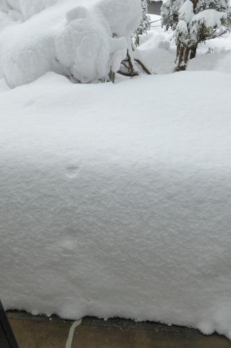室内から見た 積雪の様子