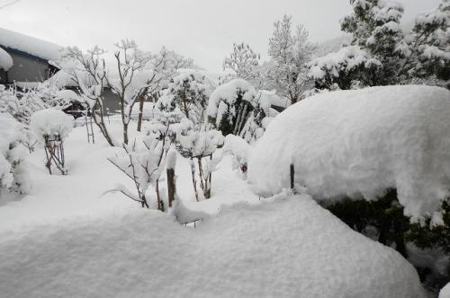 今朝の雪の様子 まだ80㎝はあります。