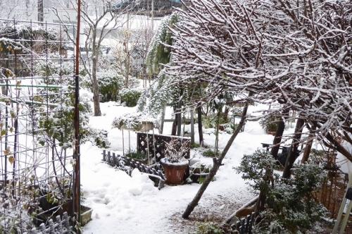 庭の様子 また雪です。