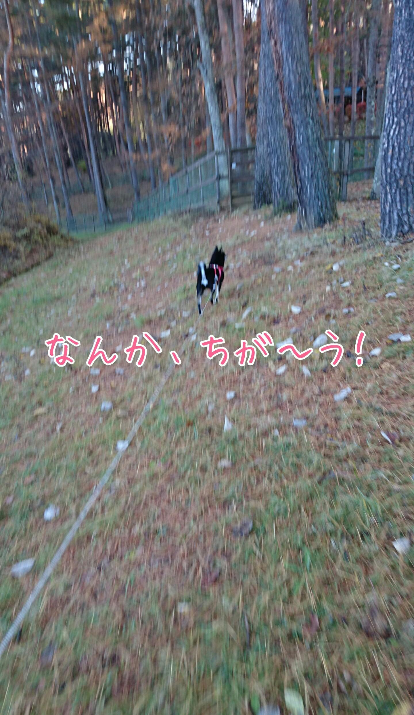 20161204171614edf.jpg
