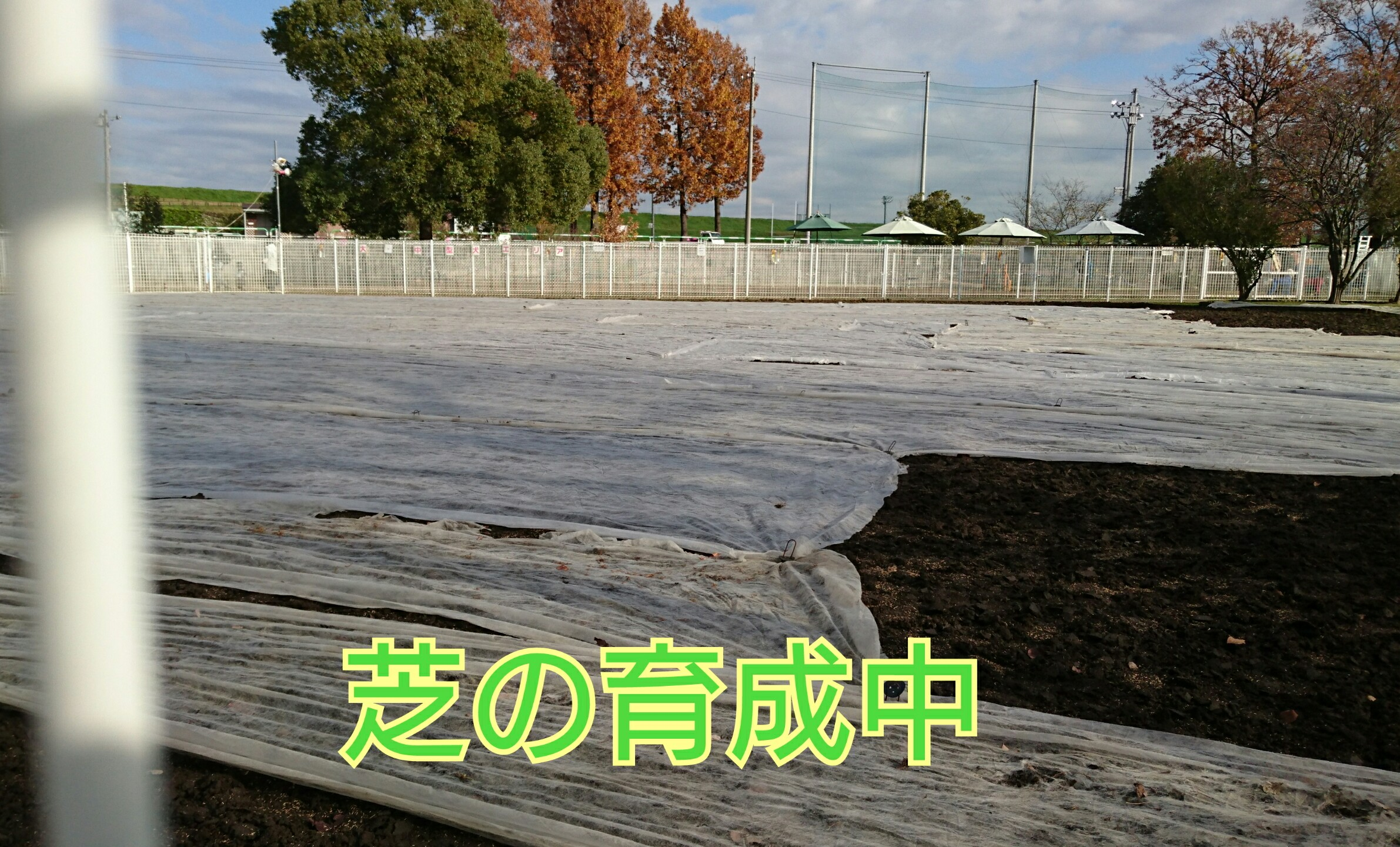 201612111209448a1.jpg