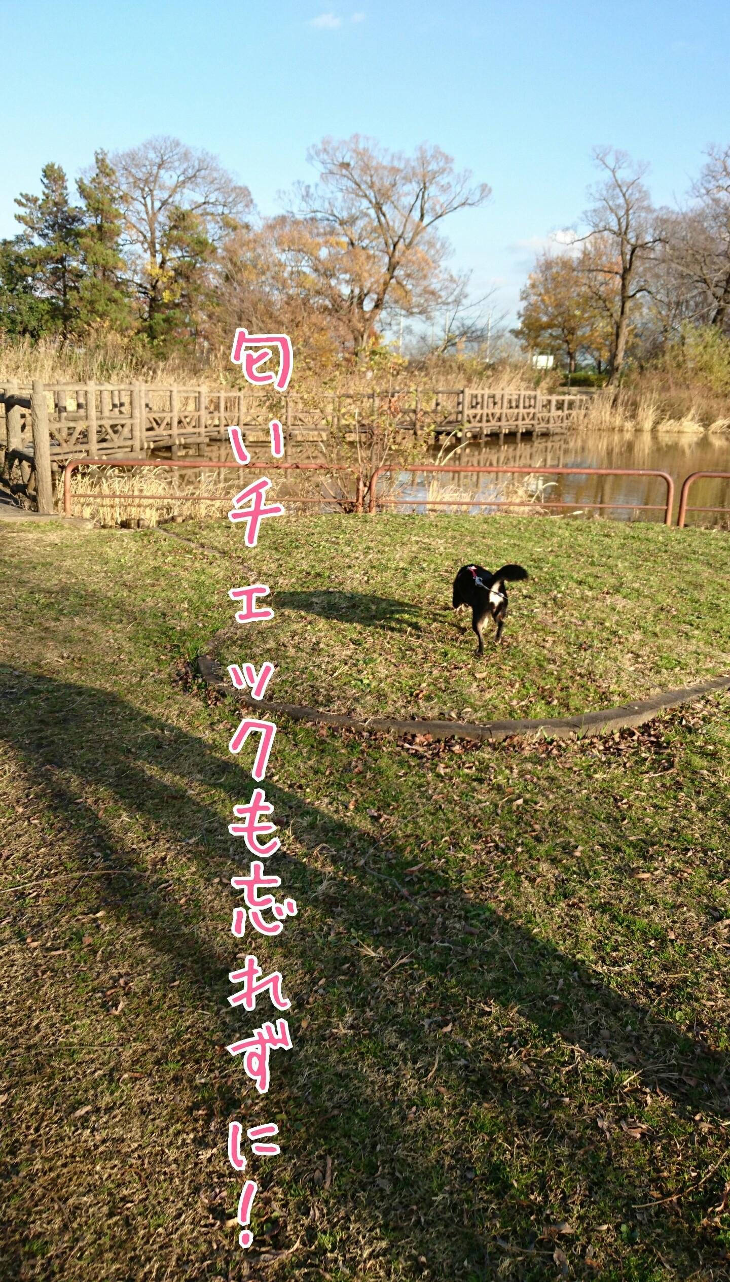 201612111608594e8.jpg