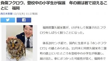 news負傷フクロウ、登校中の小学生が保護 年の瀬は署で迎えることに 福岡