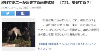 news渋谷でポニーが疾走する画像拡散 「これ、夢見てる?」
