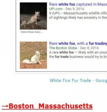 tokWhite Fox Fur Trade
