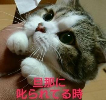 newsやはり猫は賢い……! 男性に叱られたとき・女性に叱られたときの比較画像 その表情の違いに驚きの声2