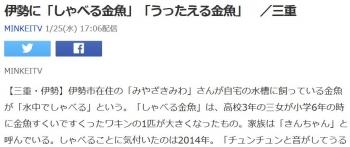 news伊勢に「しゃべる金魚」「うったえる金魚」 /三重