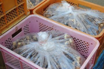 生姜袋入りblog