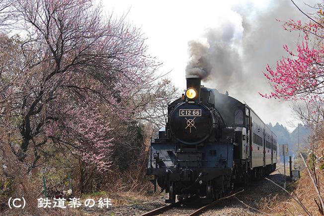 20140316寺内5D3