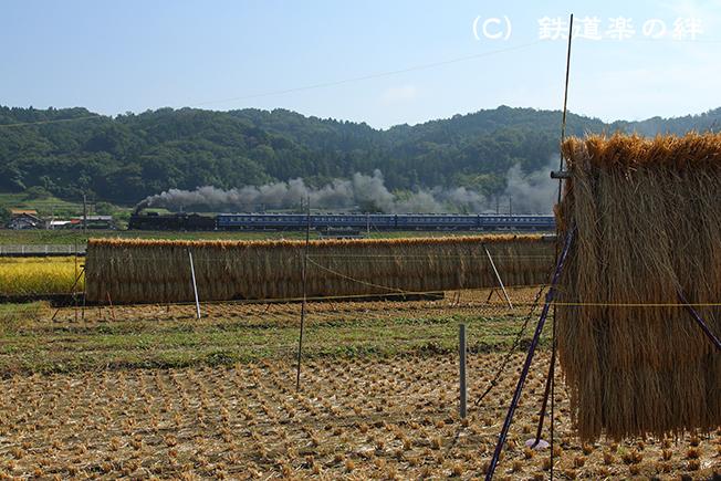 20141011敷島025D3
