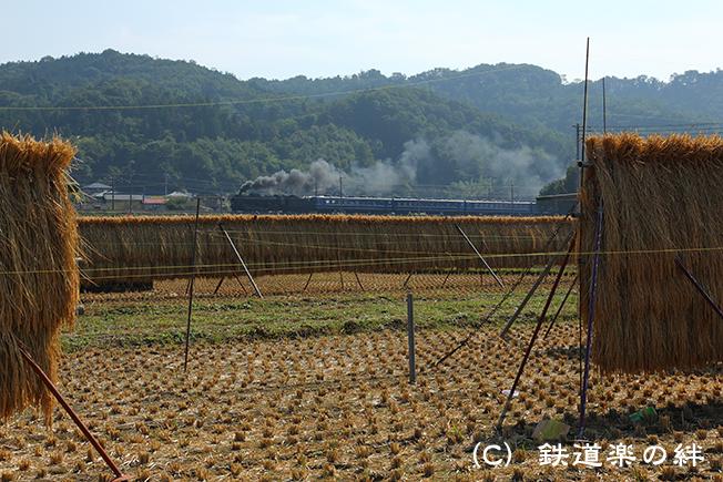 20141011敷島015D3