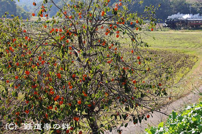 20141025笹原田015D3
