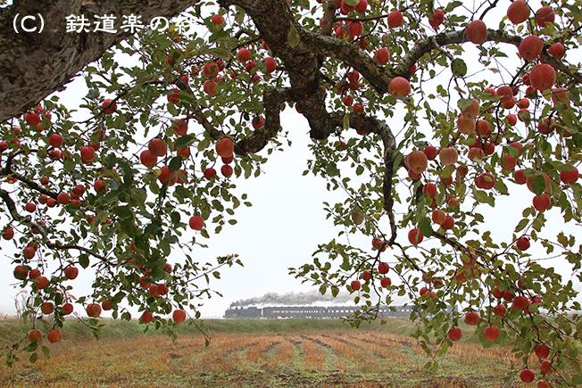 20141105会津坂下015D3