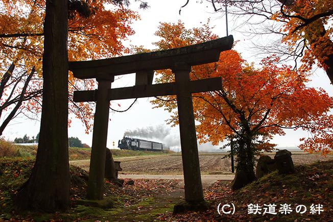 20141106根岸5D3
