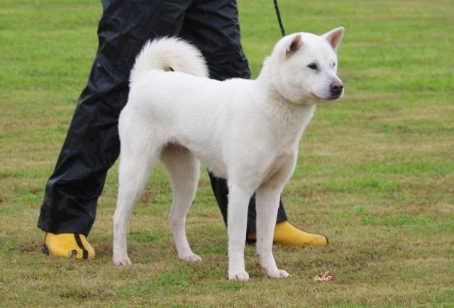 The! 紀州犬 ブログ