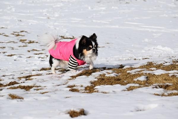 DSC_0016コタ雪