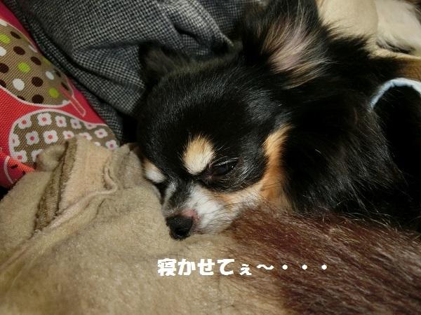CIMG1276眠い2
