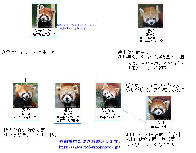 シャンチーくんと優花さんの家族ファミリー家系図