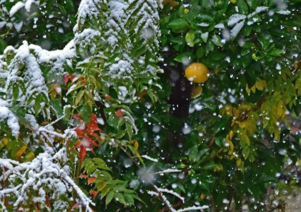 雪景色 DSC_0044
