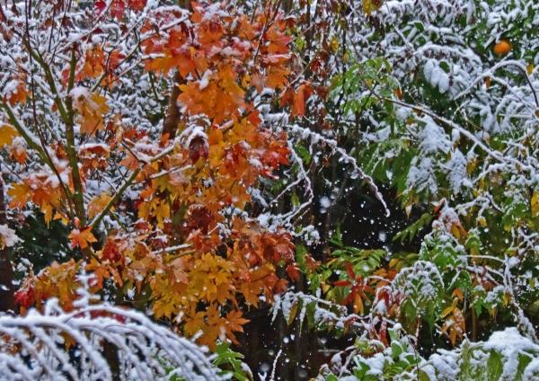雪景色 DSC_0047