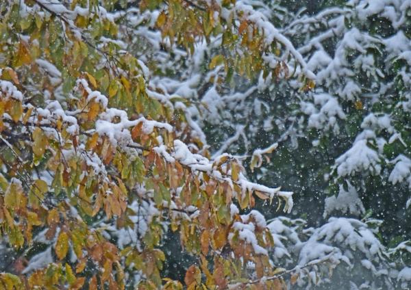 雪景色 DSC_0226