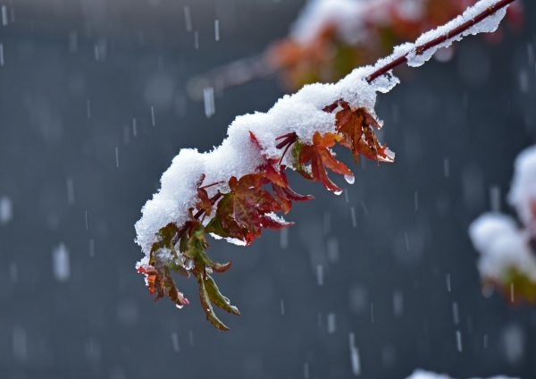 雪景色 DSC_0242