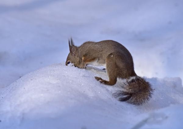 リス雪1 DSC_0338