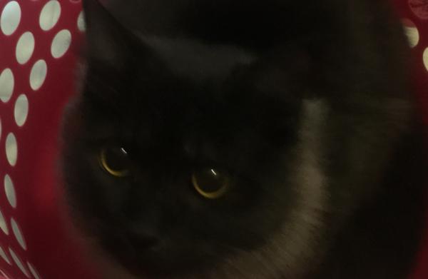 洗濯カゴ 猫