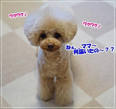 DSC01694 (2)