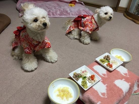 ココモコ おせちを食べました♪ 愛犬だいすきお正月料理3