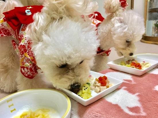 ココモコ おせちを食べました♪ 愛犬だいすきお正月料理4