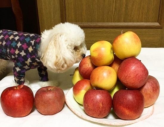 たーくさんりんごいただきました!