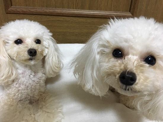 ココ・モコ  2歳3ヶ月 ワ━ヽ(*´Д`*)ノ━ィ!!!! 2