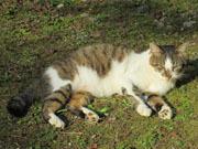 201611 紅葉谷 猫