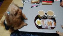 お茶で一息1