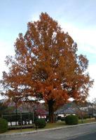 大きなシンボルツリー
