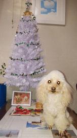 クリスマスっぽい記念写真1