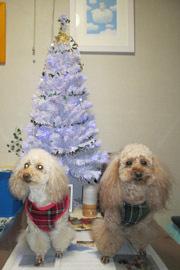 クリスマスっぽい記念写真2