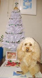 クリスマスっぽい記念写真3