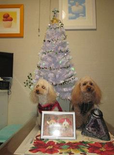 クリスマスっぽい記念写真5