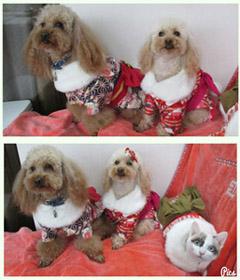 犬猫着物姿 コラージュ