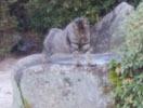 0116 今日の猫1