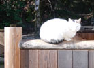 0116 今日の猫2