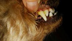 NonRose 歯並び3