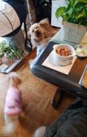 まぐろ巻寿司でお昼ご飯5