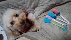 膝の主の上で編み編み4