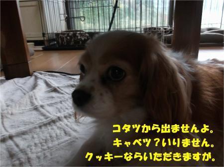 01_convert_20161201175512.jpg